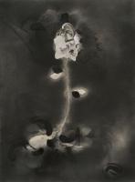 http://www.nilskarsten.com/files/gimgs/th-32_5_5_black-flower-4.jpg