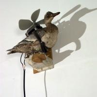 https://www.nilskarsten.com:443/files/gimgs/th-15_15_freedom-fighter-birdweb.jpg